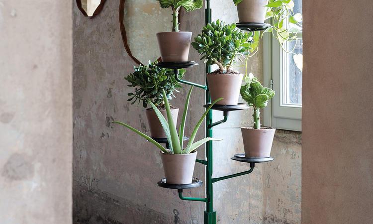 Zanotta 400 Albero Växthållare i grön färg