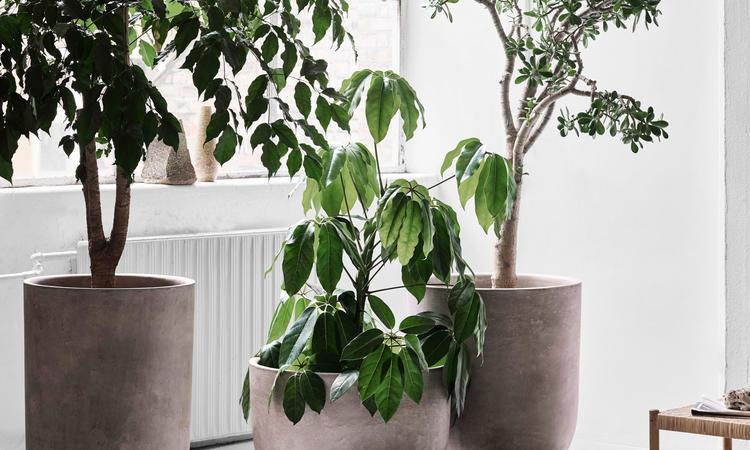&tradition Planter SC44 Kruka i färgen Silver Grey