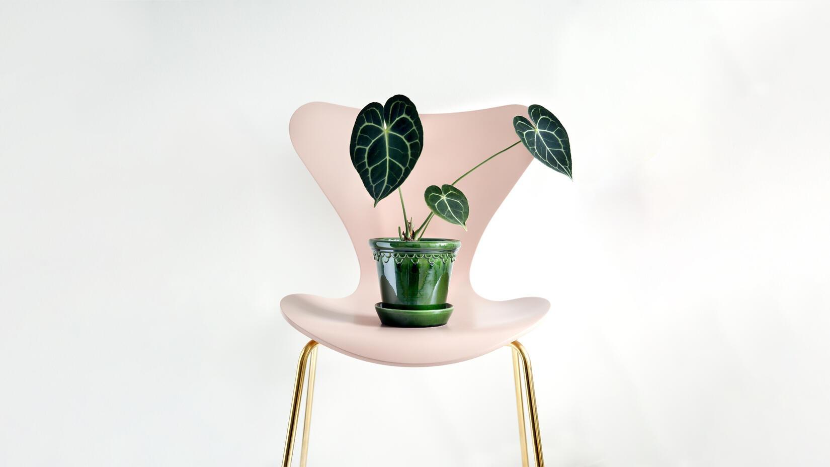 Bergs Potter Kruka på en vacker Sjuan-stol