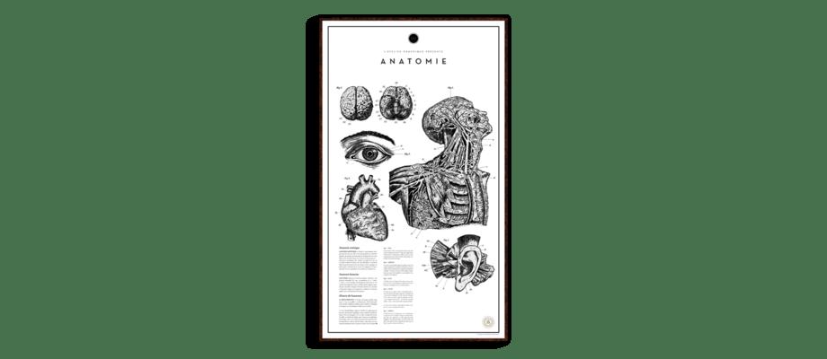 Anatomie är en poster från Atelier Graphique som inspirerats av franska medicinböcker