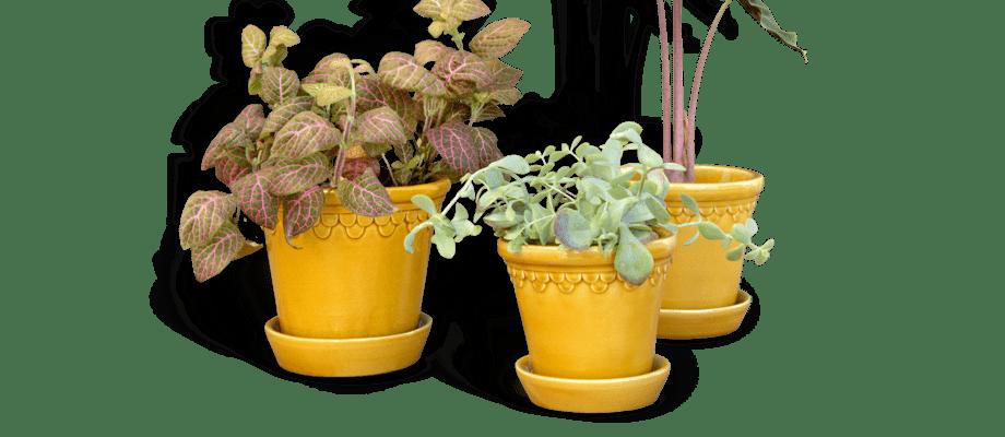 Bergs Potter Københavner Yellow Amber Kruka i tre storlekar