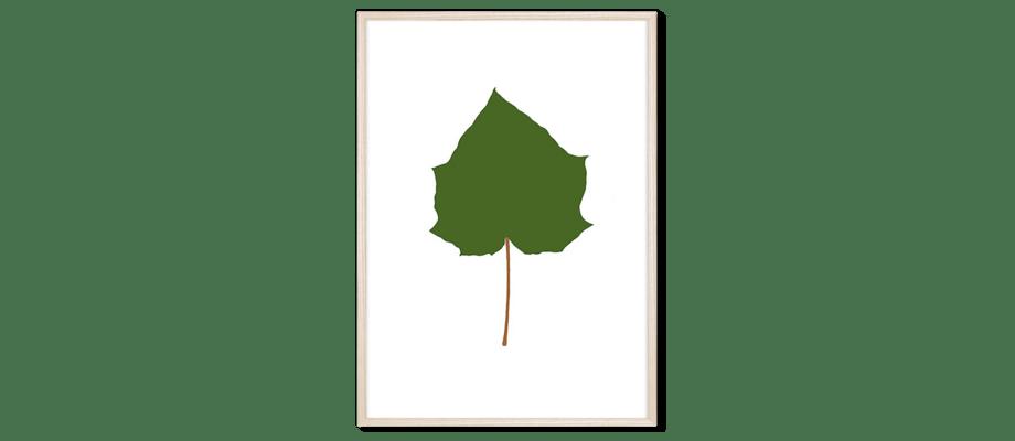 Magis Leaves Paulownia Tormentosa Poster i grön färg med en ram i ljus ask
