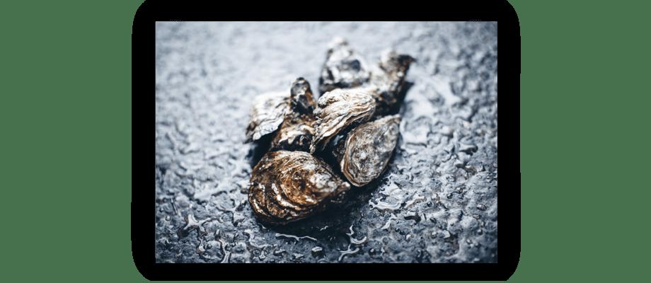 Fotoprintet Oysters av Peter Brinch säljs exklusivt på Olsson & Gerthel